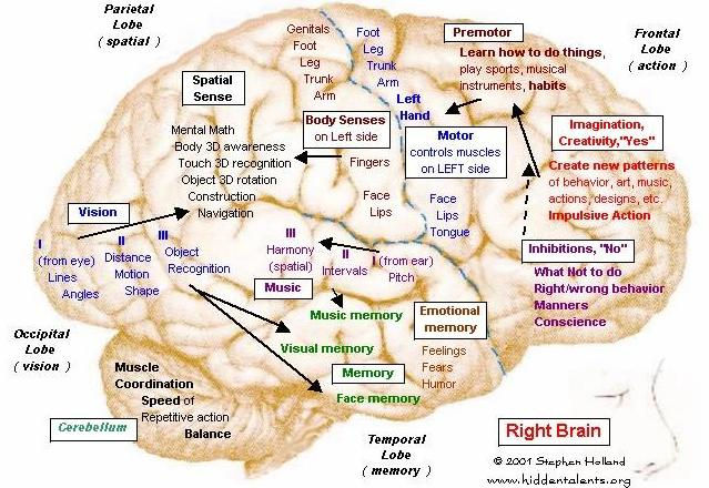 Hidden Talents--Brain 08 Sex Differences